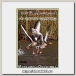Диск DVD Вит Ар №3 На гусиных перелетах