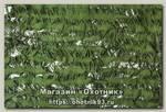 Маскировочная сеть Нитекс Эталон 2*3м сетевая основа светло-зеленый