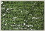 Маскировочная сеть Нитекс Эталон 3х6м сетевая основа светло-зеленый